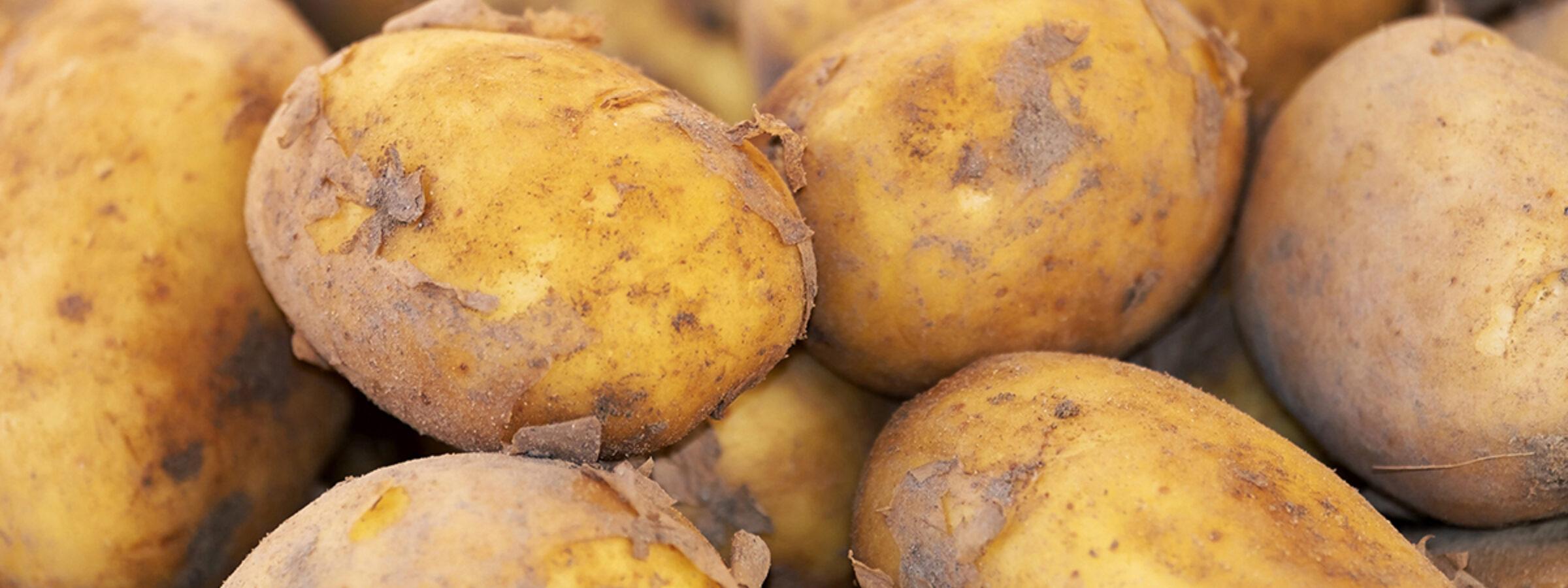 Aardappelendichtbij_1038 BO Akkerbouw